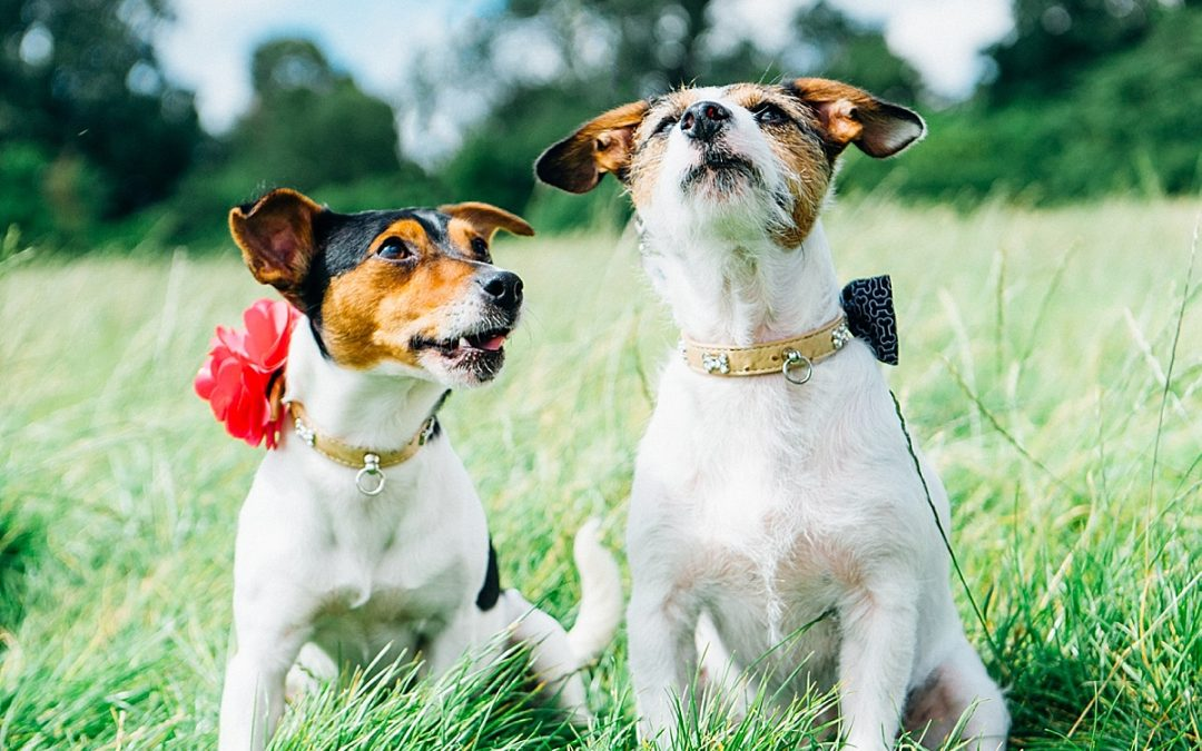 WANTED: Dogs to take part in photo shoot