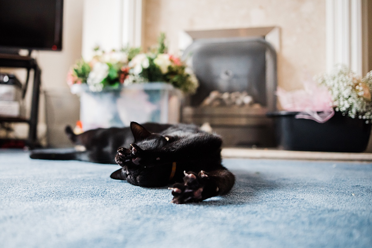 Kat's cat having a stretch in their home - Photo taken by Parrot and Pineapple Wedding Photography
