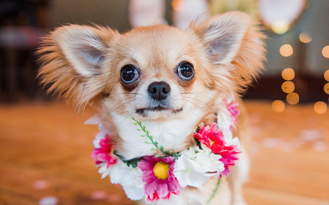 Dog Wedding Style