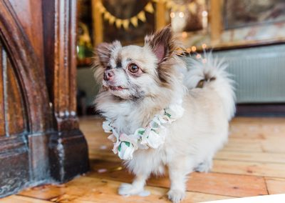 Hendrix-white-rose-silk-collar-dog-wedding-style-parrot-and-pineapple.