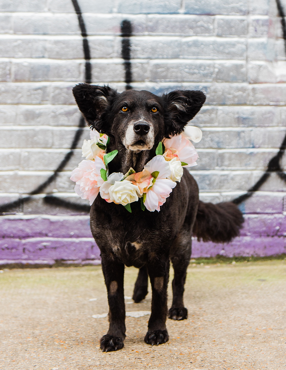 belinha-flower-collar-dog-wedding-styple-parrot-and-pineapple-photography