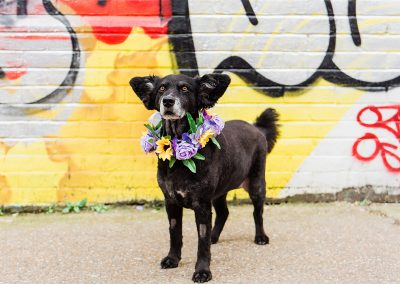 belinha-wearing-flower-collar-dog-wedding-styple-parrot-and-pineapple=photography