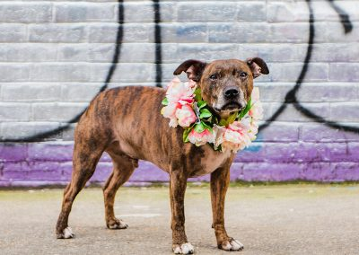 captain-floral-collar-dog-wedding-style-parrot-and-pineapple