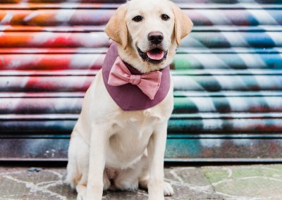cobo-pink-bowtie-dogs-wedding-style-parrot-and-pinapple