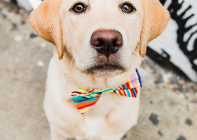 cobo-rainbow-bowtie-dogs-wedding-style-parrot-and-pinapple