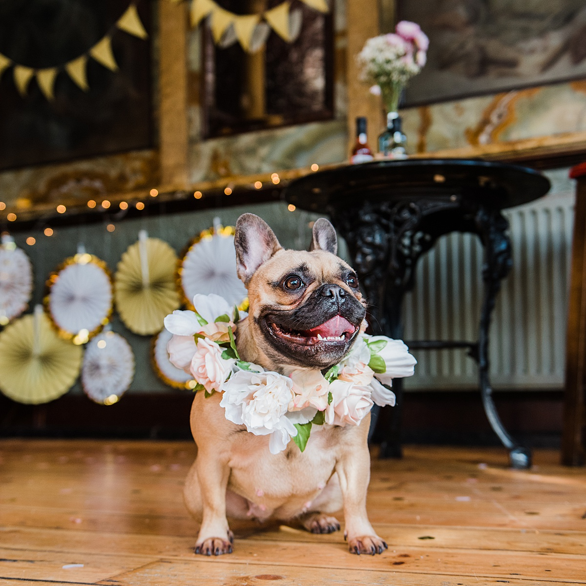 harley-quinn-floral-collar-dogs-wedding-style-parrot-and-pinapple