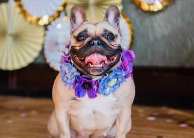 harley-quinn-love-story-collar-dogs-wedding-style-parrot-and-pinapple