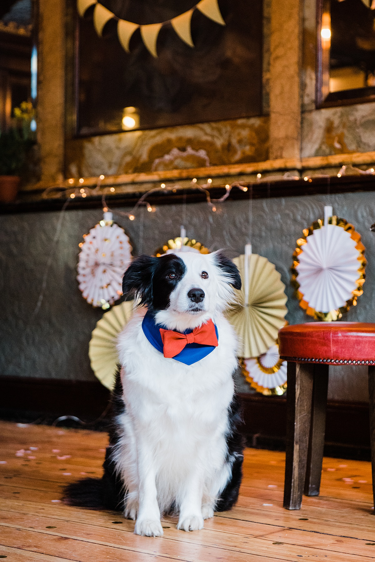 lina-orange-blue-bowtie-dogs-wedding-style-parrot-and-pinapple