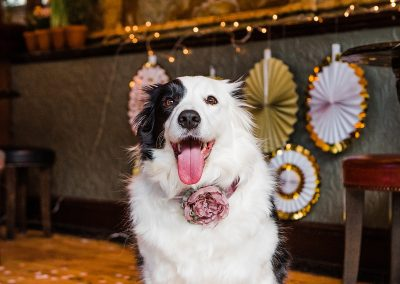 lina-pink-blush-collar-dogs-wedding-style-parrot-and-pinapple
