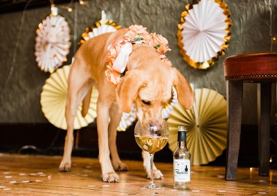 nala-pawseco-dogs-wedding-style-parrot-and-pinapple