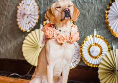 nala-peach-rose-collar-dogs-wedding-style-parrot-and-pinapple
