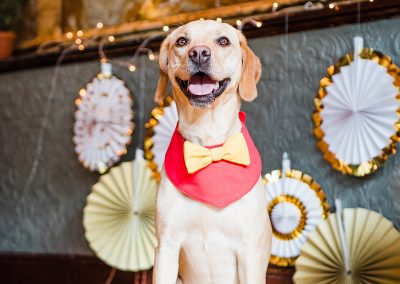 nala-red-yellow-bowtie-dogs-wedding-style-parrot-and-pinapple
