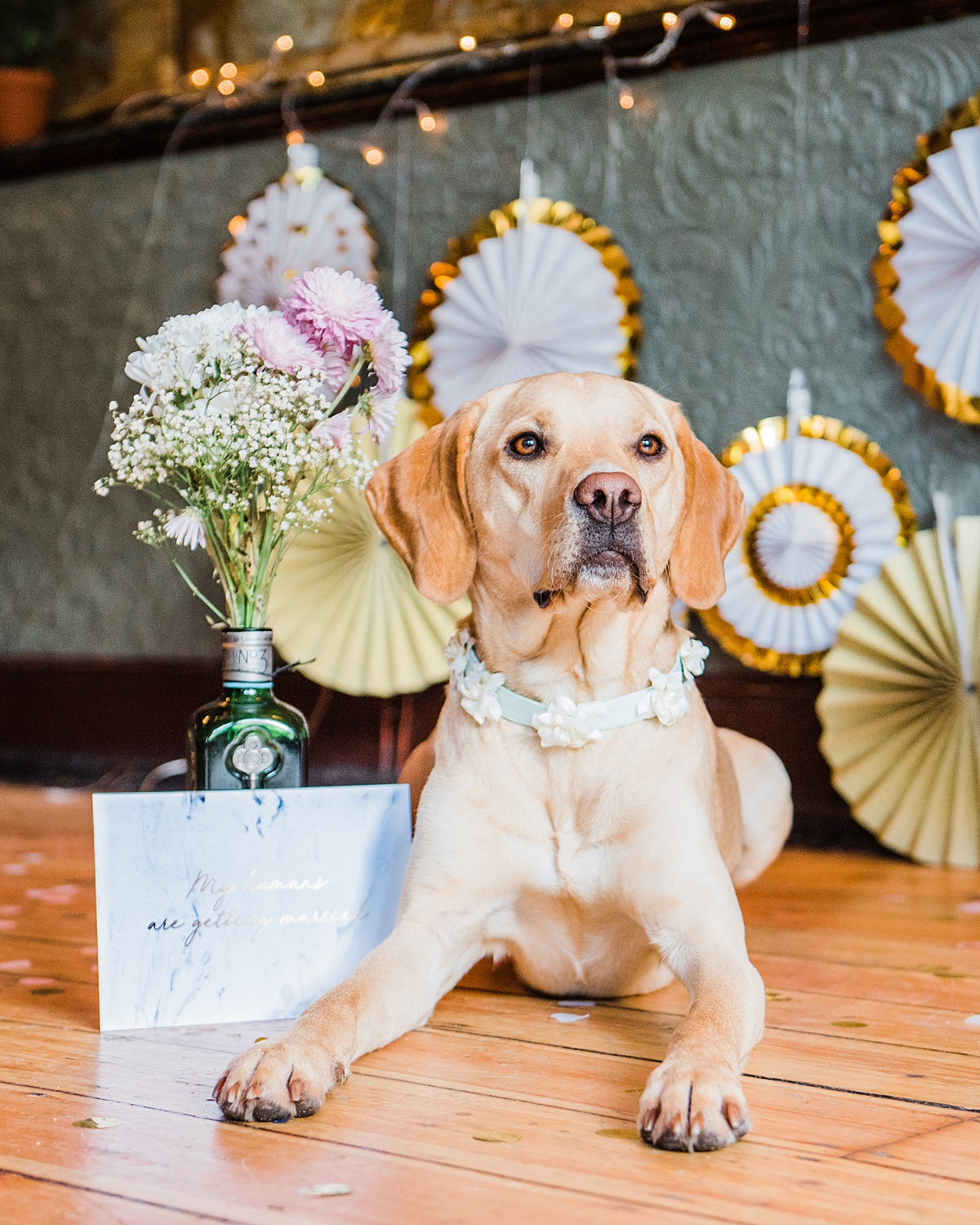 nala-with-wedding-stationary-dogs-wedding-style-parrot-and-pinapple