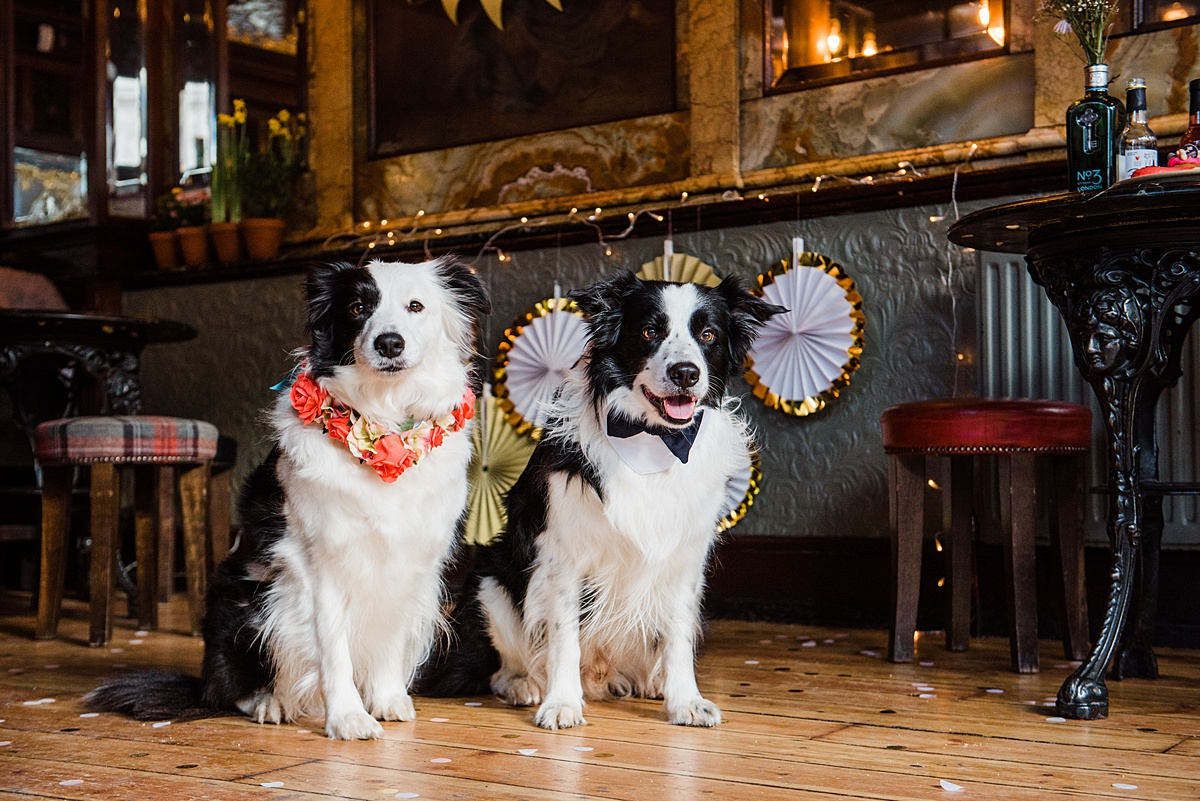 pan-and-lina-floral-collars-dogs-wedding-style-parrot-and-pinapple