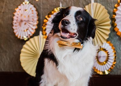 pan-gold-holographic-collar-dogs-wedding-style-parrot-and-pinapple