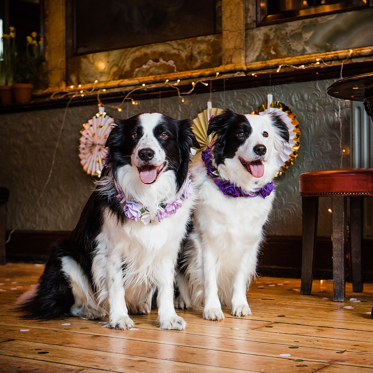pan-lina-kiss-collar-dogs-wedding-style-parrot-and-pinapple