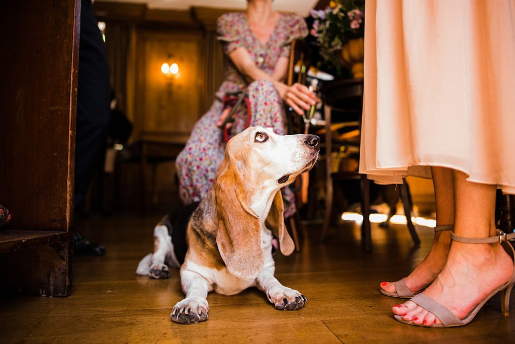 Dog wedding guest having a rest at the reception gipsy queen pub