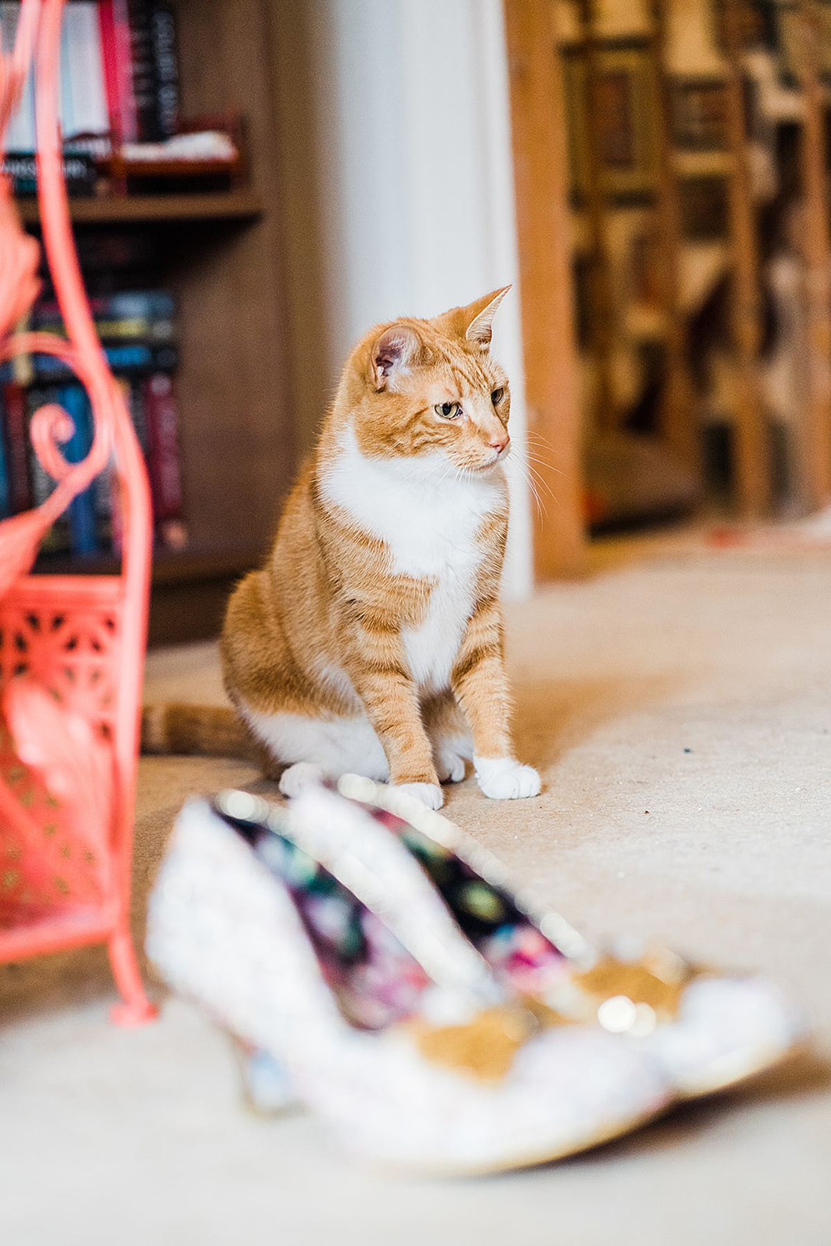Ginger and White Cat sat near a pair of white wedding shoes - photo taken by Parrot and Pineapple Wedding Photography