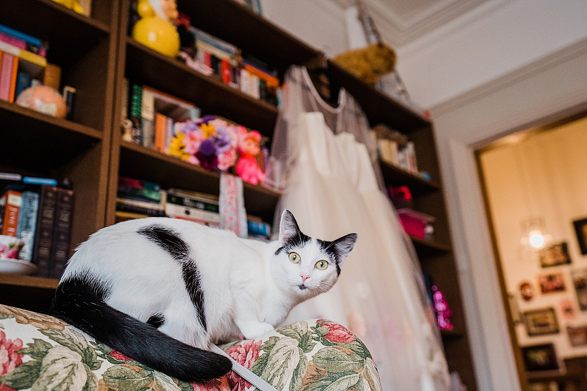 white and black cat staring at the camera while wedding dress hangs in the background on a book shelf - photo taken by Parrot and Pineapple Wedding Photography