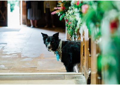 Dog-at-wedding-Temple-Balsall-Church-DIY-Home-Garden-Wedding-Parrot-and-Pineapple-Wedding-Photography