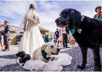 3 dogs sitting on big white wedding dress at Anran Wedding