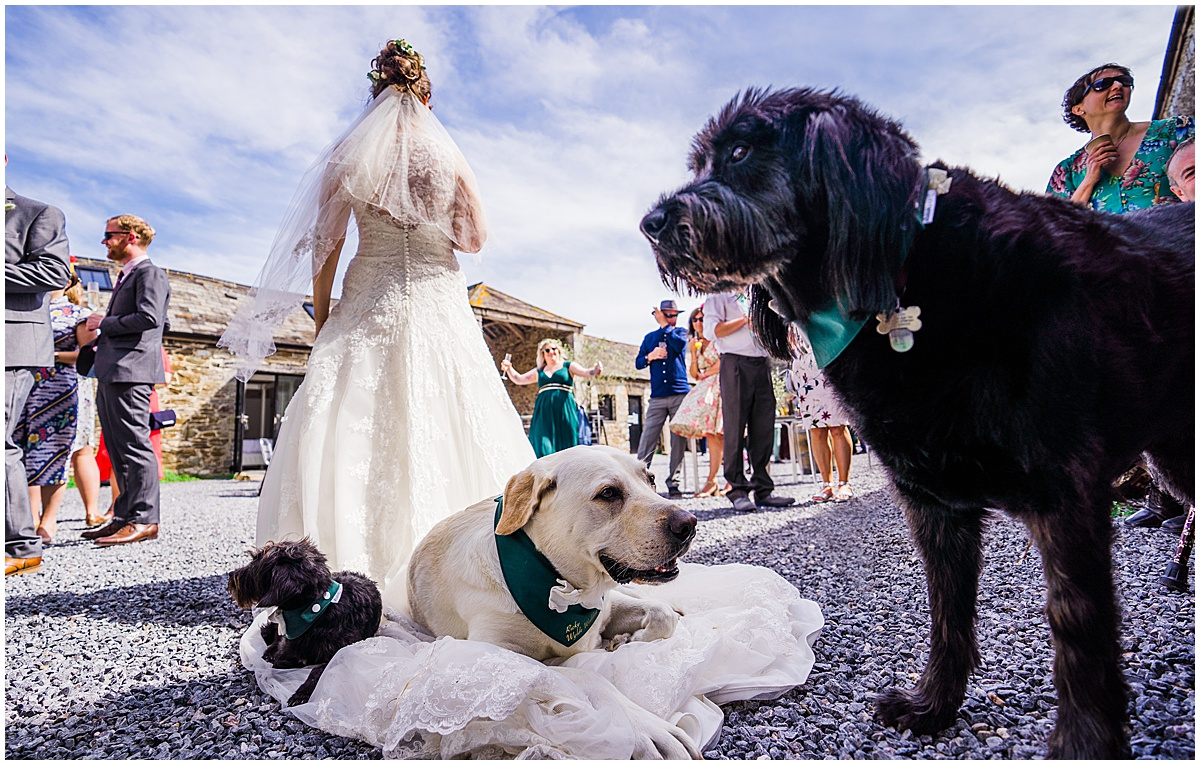 3 dogs sitting on big white wedding dress at Anran Wedding