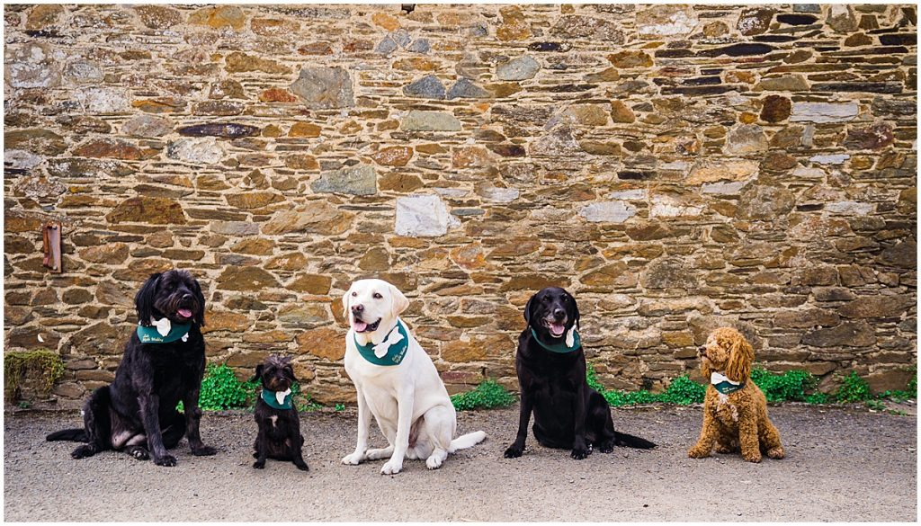5 dogs sit in a row against old brick wall at anran wedding