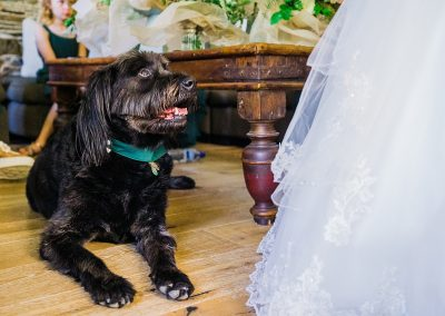 black labradoodle looks at bride wear full skirted dress