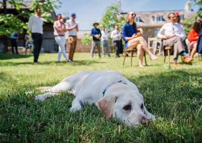 yellow labrador lies in shade at sunny wedding