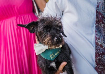 small black dog wearing green bandana white bow tie in arms of man