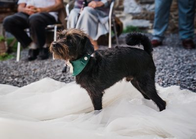 small black dog wearing green bandanna stands on brides train