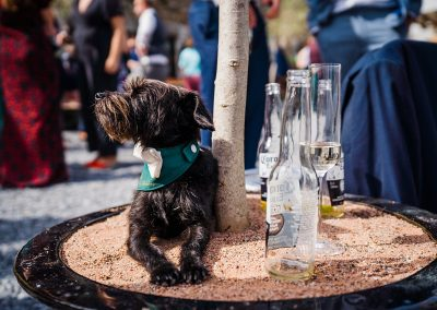 small black dog wear green bandanna sits next to beer bottle at wedding