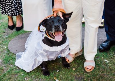 staffy smiles as guest strokes head at wedding