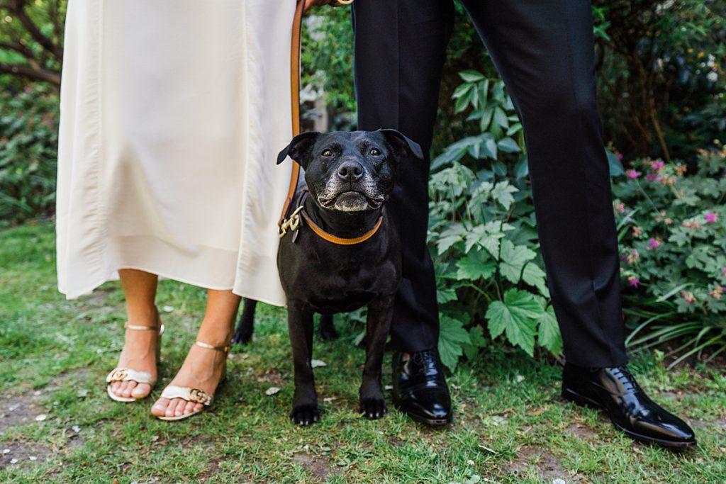 black staffy sits at feet of bride and groom dog friendly wedding