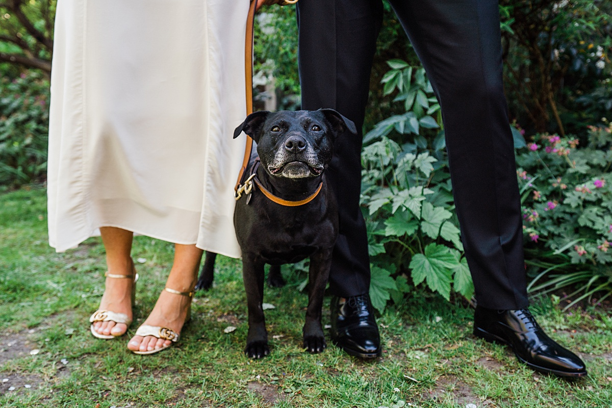 black staffy sits at feet of bride and groom dog friendly wedding