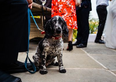 black and white spaniel sit amongst guests at wedding dog friendly wedding