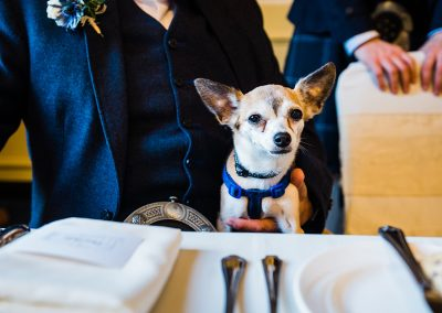 chihuahua sits on a lap at a wedding table dog friendly wedding