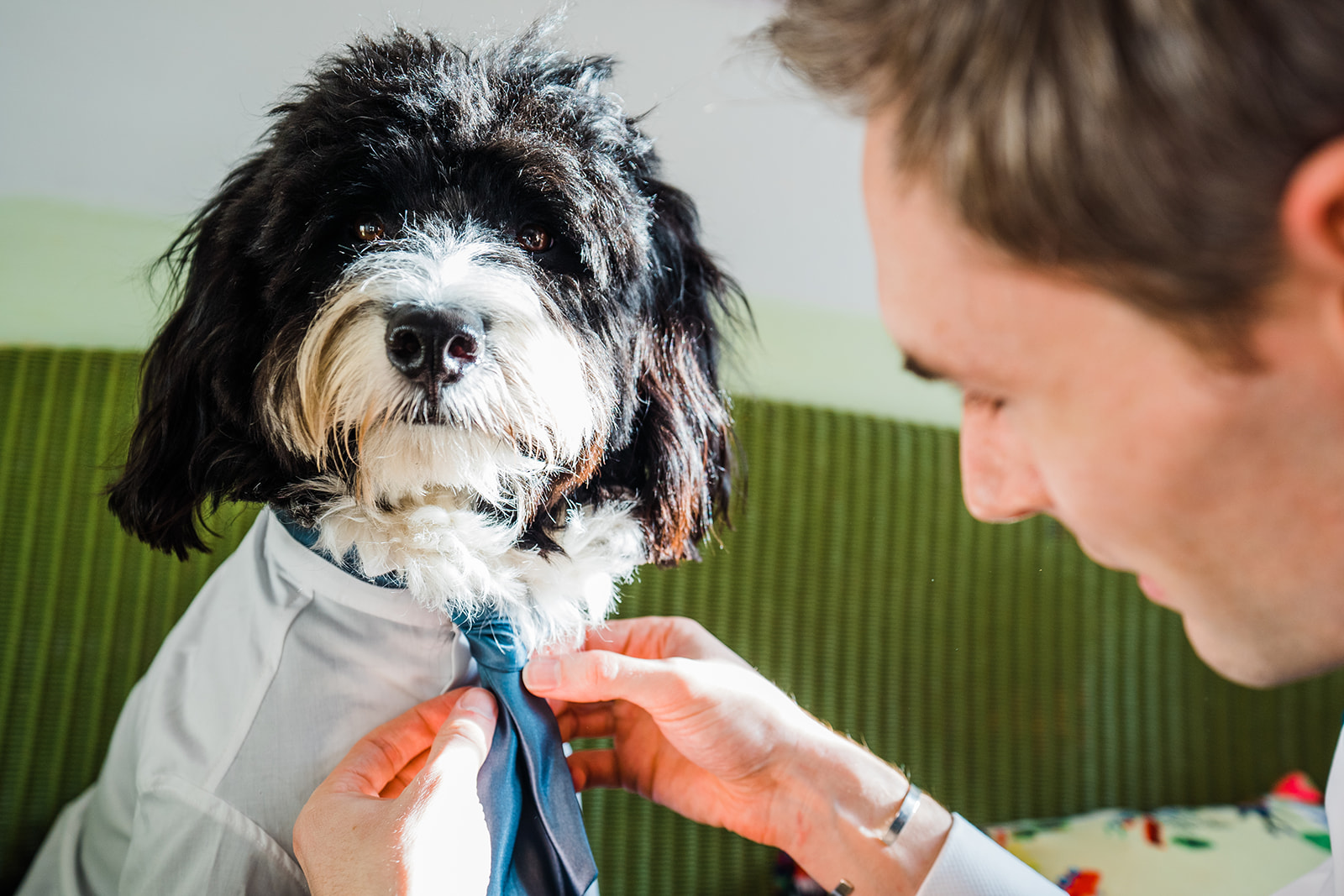 black and white shaggy dog at a wedding wearing a shirt and having his cravat tied by the groom